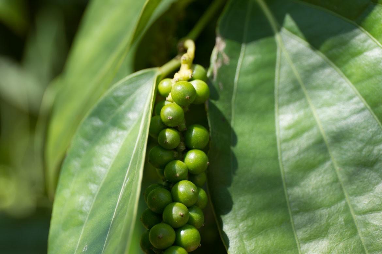 EcoFarm, biochar project