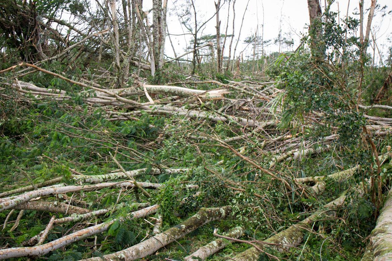 Hurricane Iselle windfall