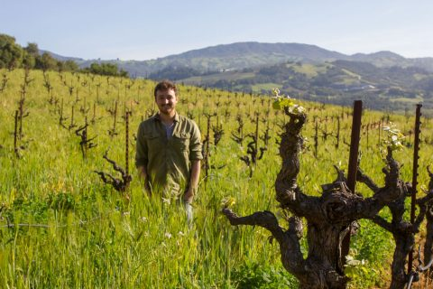 Pacific Biochar, vineyard application