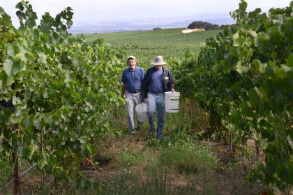 Field Trial Investigates Biochar in Vineyard, Summer 2020 Report