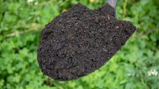 biochar carbon credits