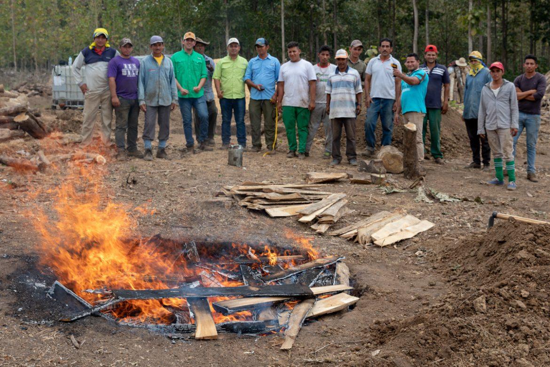 open pit biochar production at teak plantation in Ecuador