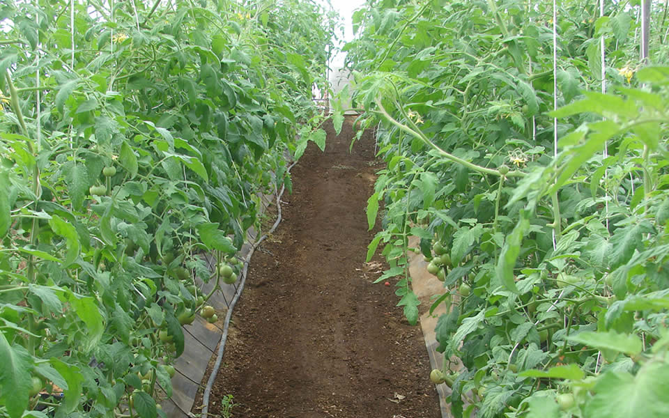 Biochar in the Nursery