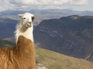 Finding Biochar and Terra Preta in the Peruvian Andes
