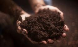 Biochar in Composting