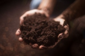 Photo of biochar compost in hand.