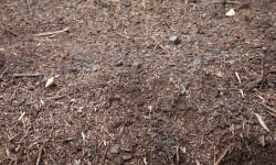 pacific-biochar_biochar-compost_2009-02439