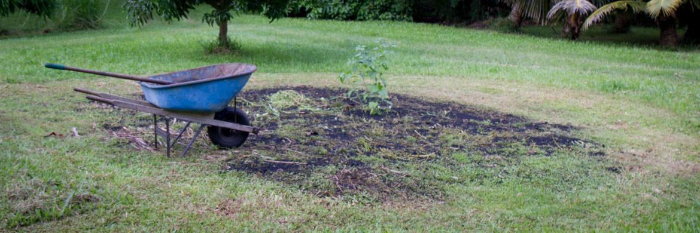 hurricane Iselle windfall biochar garden